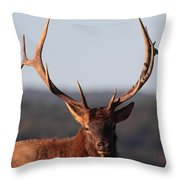 Bull Elk Portrait Throw Pillow