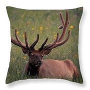 Bull Elk Resting Throw Pillow