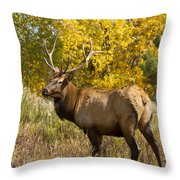 Bull Elk With Autumn Colors Throw Pillow