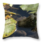 Bull Frog Throw Pillow