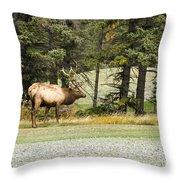 Bull In Waiting Throw Pillow