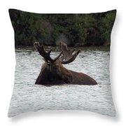 Bull Moose - 3587 Throw Pillow