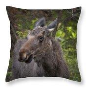 Bull Moose   #5654 Throw Pillow
