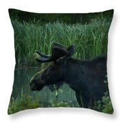 Bull Moose   #5701 Throw Pillow