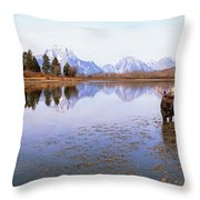 Bull Moose Grand Teton National Park Wy Throw Pillow