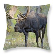 Bull Moose IIIIi Throw Pillow