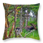 Bull Moose In Cape Breton Highlands Np-ns Throw Pillow