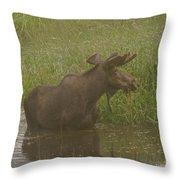 Bull Moose Looking Around  Throw Pillow