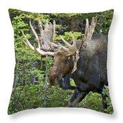 Bull Moose Shedding Velvet Throw Pillow