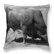 Bull Number 07 Throw Pillow by Daniel Hagerman