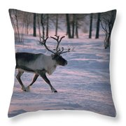 Bull Reindeer In  Siberia Throw Pillow