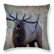 Bull Roar Throw Pillow