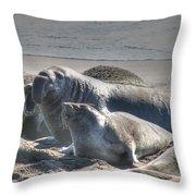 Bull Seal Throw Pillow