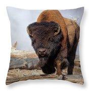 Bull Strut Throw Pillow