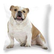 Bulldog, Female Throw Pillow