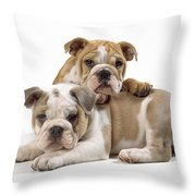 Bulldog Puppies, One On Top Of The Other Throw Pillow