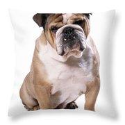 Bulldog Sitting Throw Pillow
