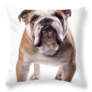 Bulldog Standing, Facing Camera Throw Pillow
