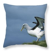 Bullers Albatross Spreading Wings Throw Pillow