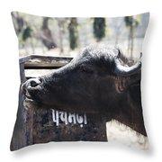 Bulls Cry Throw Pillow