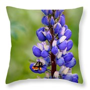 Bumble Bee And Lupine Throw Pillow