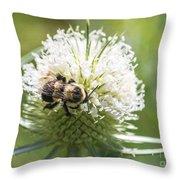 Bumble Bee On Button Bush Flower Throw Pillow