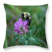 Bumble Bee On Red Clover  Throw Pillow