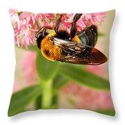 Bumblebee Clinging To Sedum Throw Pillow