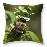 Bumblebees And Basil Throw Pillow