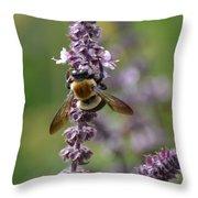 Bumbling Sage Throw Pillow