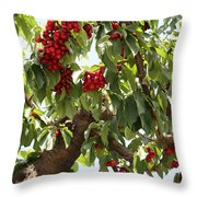 Bumper Crop - Cherries Throw Pillow