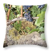 Bunches Of Red Wine Grapes Growing On Vine Throw Pillow