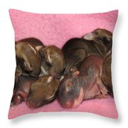 Bunny Baby Boom Throw Pillow