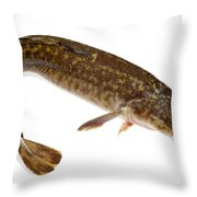 Burbot Lota Lota Isolated On White Throw Pillow