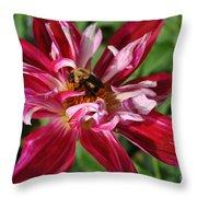 Burgundy Bee Throw Pillow