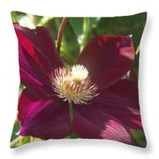 Burgundy Clematis Profile   # Throw Pillow
