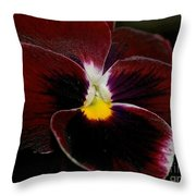 Burgundy Pansy  Throw Pillow