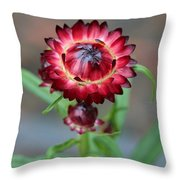 Burgundy Straw Flower Throw Pillow