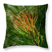 Burnished Pine Throw Pillow