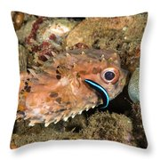 Burrfish And Cleaner Goby Throw Pillow