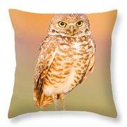 Burrowing Owl II Throw Pillow
