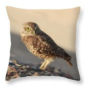 Burrowing Owl II Throw Pillow