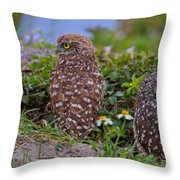 Burrowing Owl Siblings Throw Pillow