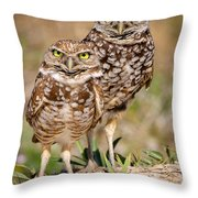 Burrowing Owls Throw Pillow