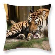 Busch Tiger Throw Pillow
