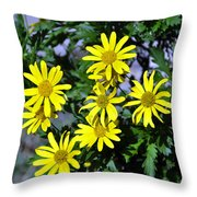 Bush Daisy  Throw Pillow