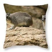 Bush Hyrax  Throw Pillow