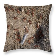 Busy Ants Throw Pillow