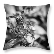 Busy Bee - Bw Throw Pillow