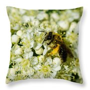 Busy Bee On A Rowan Flowers - Featured 3 Throw Pillow